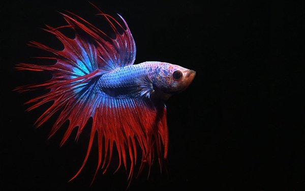 The 26 best freshwater fish for your aquarium fish care for Cool freshwater fish